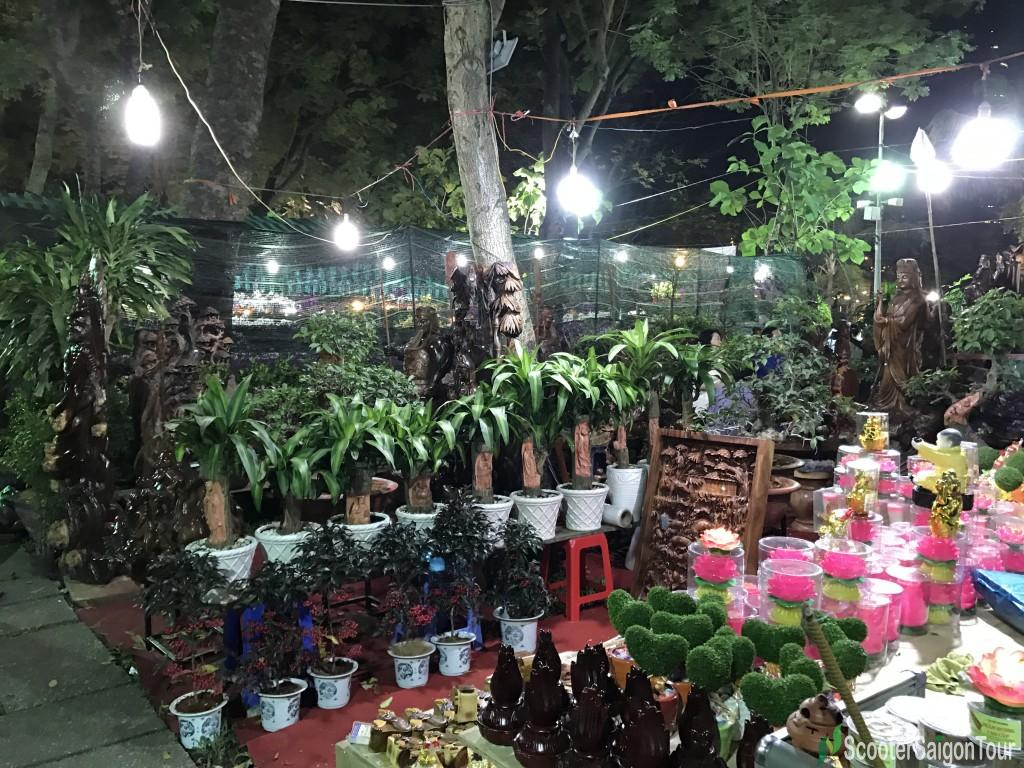 Cornstalk Dracaena At Tet Flower Market At Night - Top Flowers and Plants at Tet festival