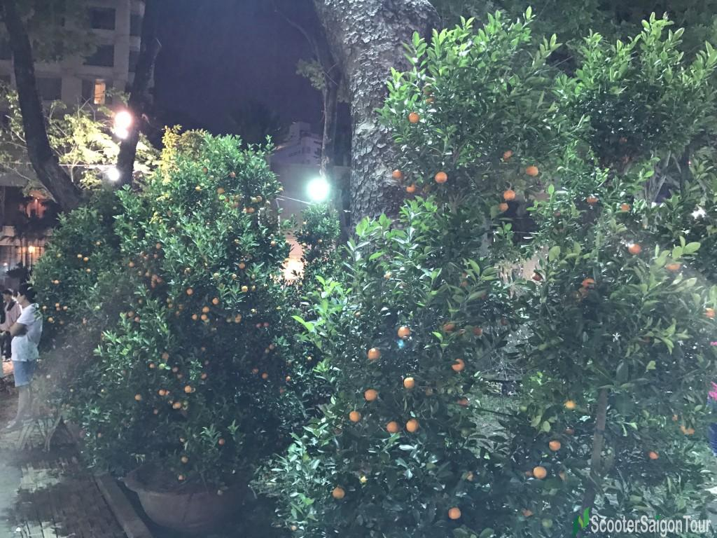 Kumquat Tree At Tet Flower Market At Night - Top Flowers and Plants at Tet festival