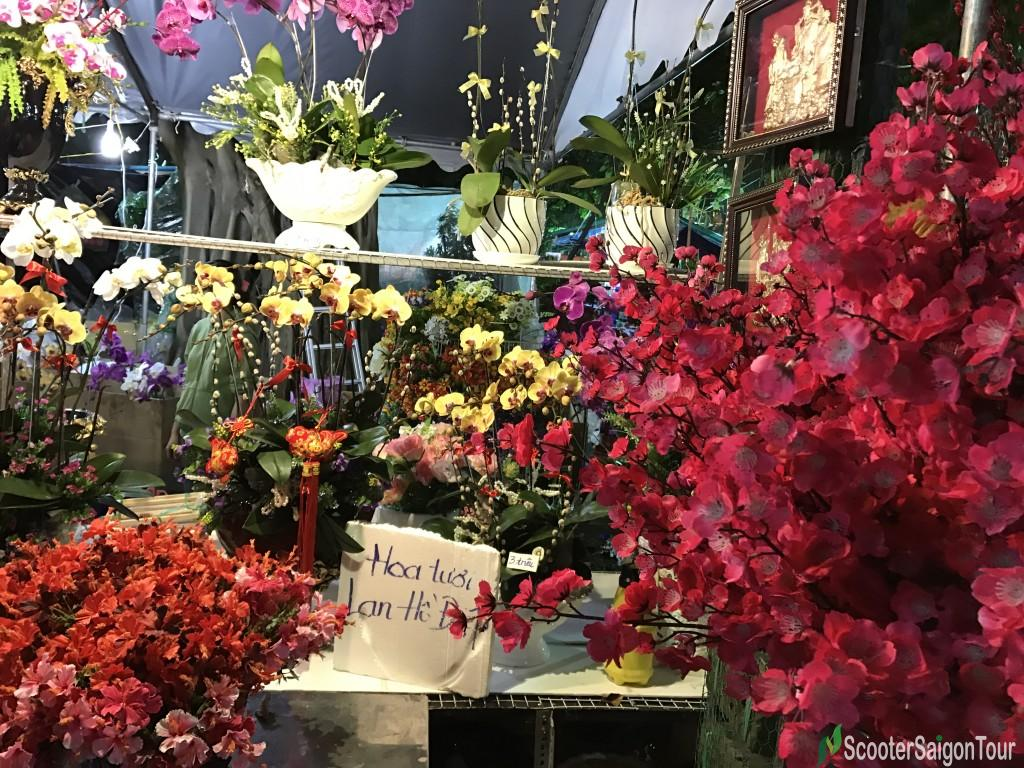 Orchard At Tet Flower Market At Night - Top Flowers and Plants at Tet festival