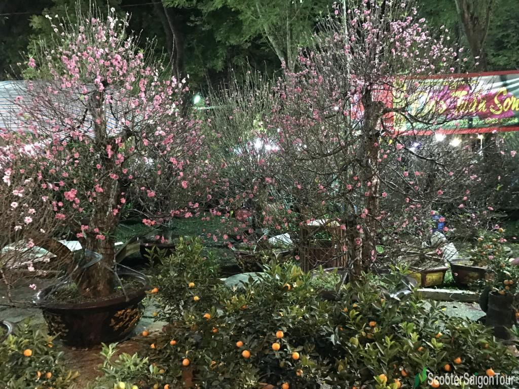 Peach Blossom At Tet Flower Market At Night - Top Flowers and Plants at Tet festival