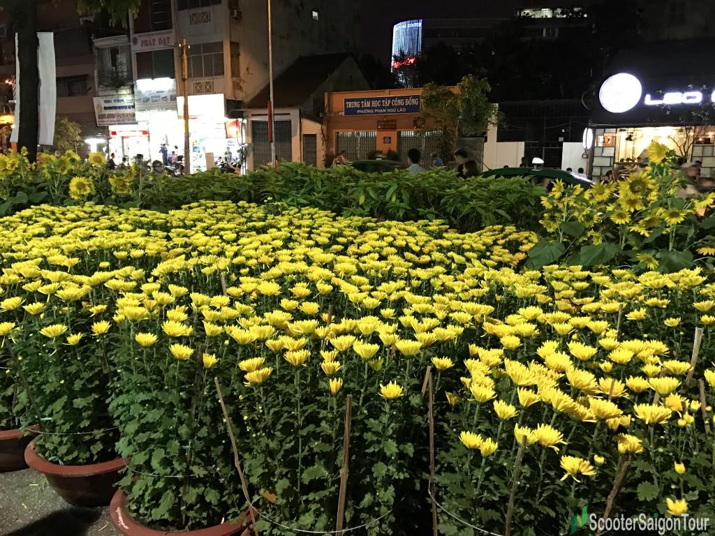 Yellow Daisy At Tet Flower Market At Night - Top Flowers and Plants at Tet festival