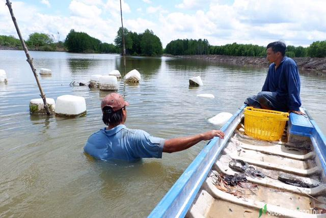 Rowing Sampan To Go Catching Oyster On River In Mekong Delta